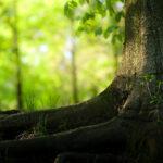 Har du husket at lytte til et træ i dag?