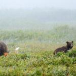På besøg i den indre vildmark