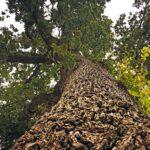 At blive et træ