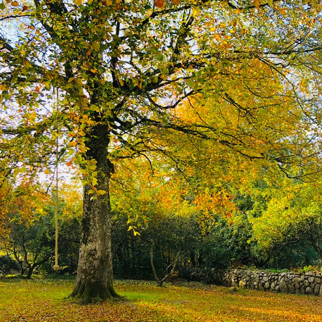vxt træ